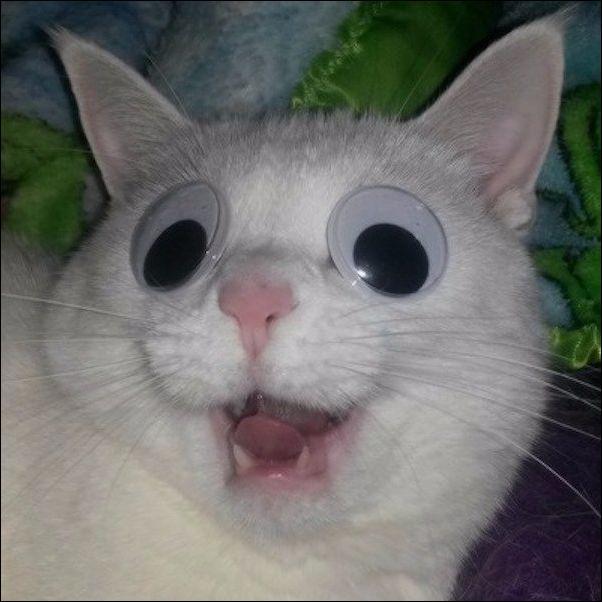коты смешные картинки фото